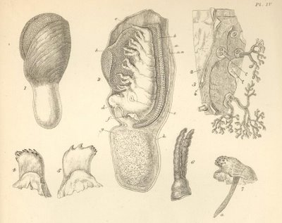 Living Cirripedia, A monograph on the sub-class Cirripedia, with figures of all the species