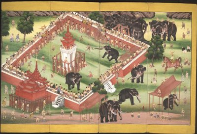 Game with elephants in enclosure