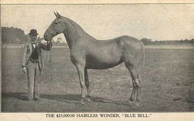 tracerapotts: The Hairless Foal Syndrome   Unusual horse