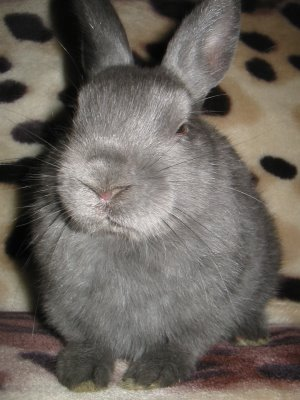Bunny by Charles DH Crosbie from flickr (CC-NC-ND)