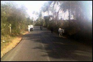 Liikenteessä Intiassa