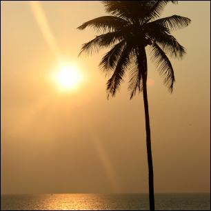 Aurinko, meri ja kookospalmu
