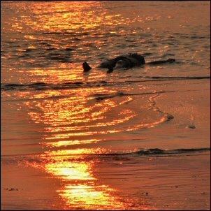 Chillausta Goan rantavesissä