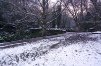 Jesmond Dene in the snow