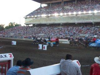 The Chuckwagon Races