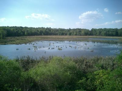 Wetlands at Huntley Meadows Park in Fairfax County, Virginia