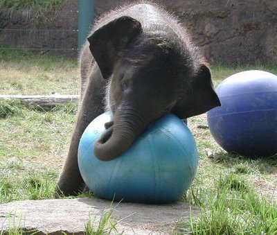 I could hug this elephant...