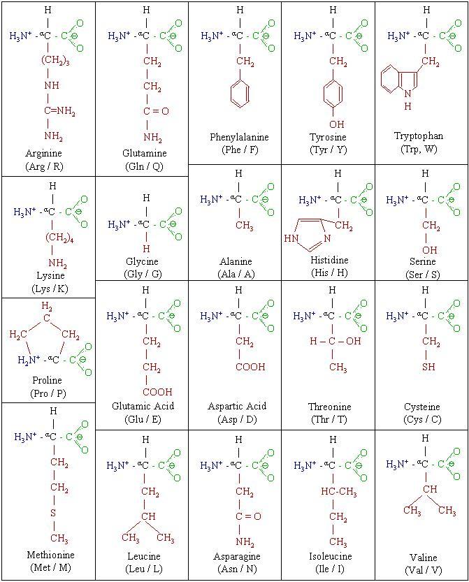 molecules amino acid chart. Black Bedroom Furniture Sets. Home Design Ideas