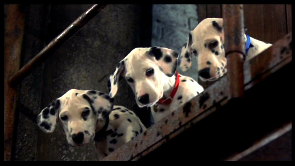 102 Dalmatians Cake Factory Pictures to Pin on Pinterest ...