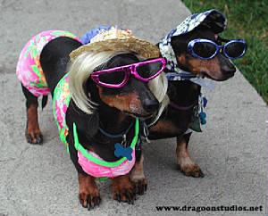 Dog Beach Wear The Best Beaches In World