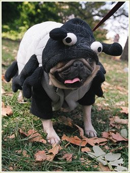 Check out these ultra funnycute and weird dog costumes. Poor little dogs that has to wear silly little costumes at the mercy of their owners. & crazylinkz: weird dog costumes