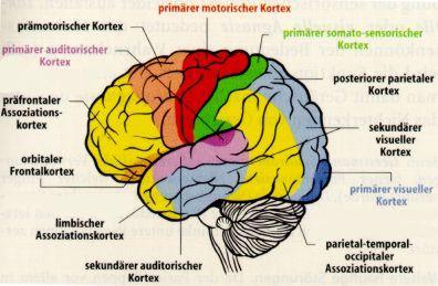 Präfrontaler Cortex Training