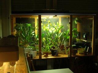 r ves d 39 orchid es fabrication d 39 une serre d 39 interieur pour orchid es. Black Bedroom Furniture Sets. Home Design Ideas
