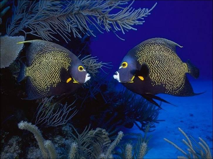 Άφθονο προφίλ ραντεβού με ψάρια