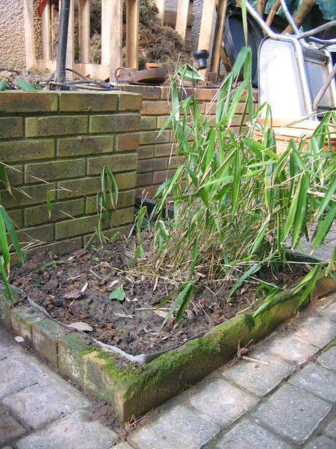 bambou jardiniere