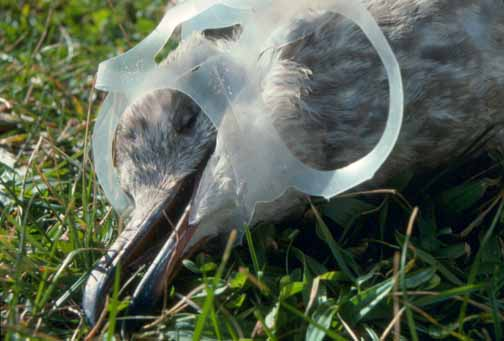 Keepin It Clean Help Stop Ocean Pollution How Trash