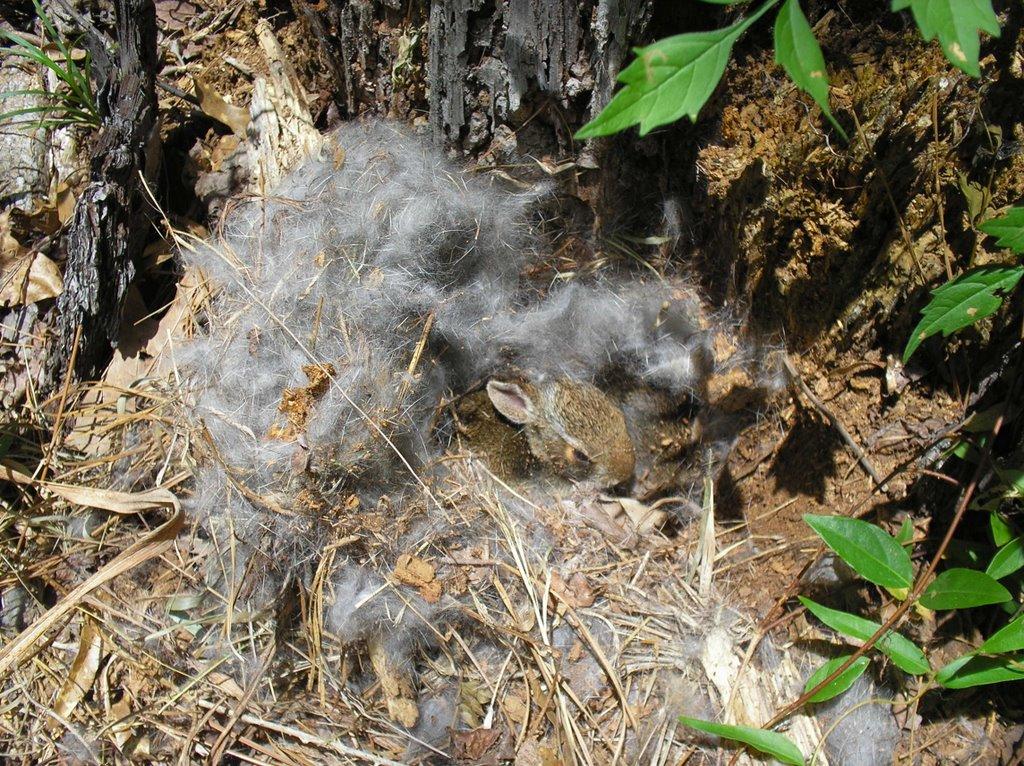 Journals Of An Amateur Naturalist Dead Animal