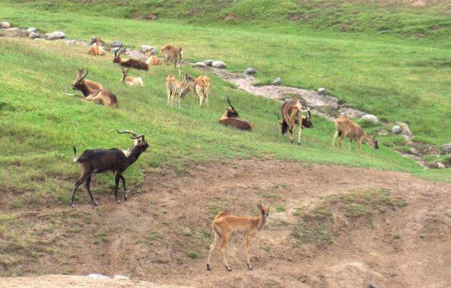 Different wild animals together - photo#47