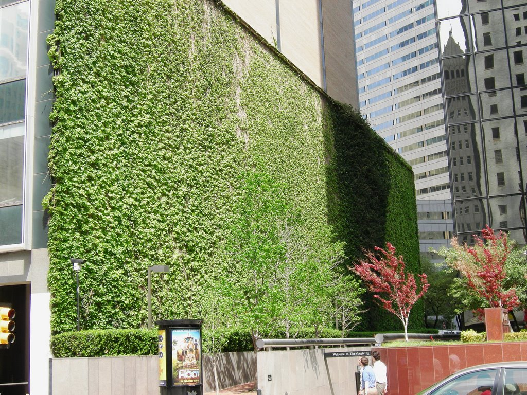 Dallas Picture Blog Wall Of Ivy
