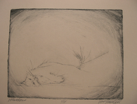 whiskers - drypoint etching