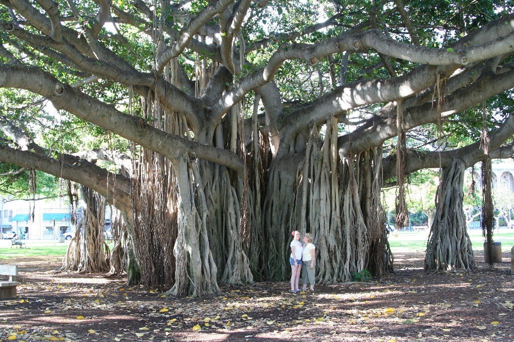 Just Take A Look At This Awesome Banyan Tree Is On The Front Lawn Of Honolulu Zoo Which Also Right Waikiki And Within 15 Minute Walk