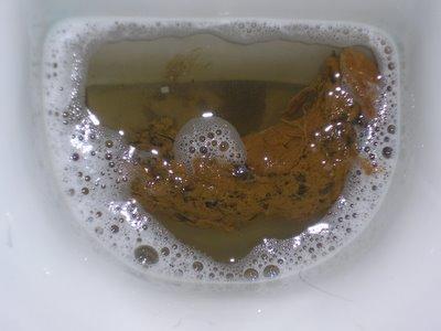 Guarda la mia merda il gattopardo - Bagno sporco di cacca ...
