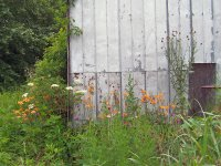 Tobacco barn and flowers