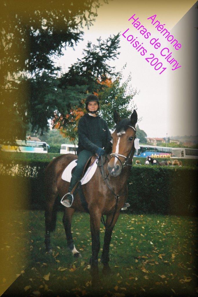 anti allergique naturel cheval