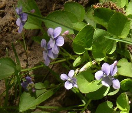 Sporadic Maunderings Flowers