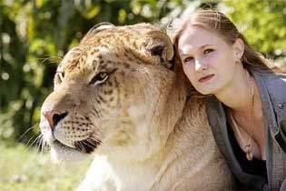 10 Liger Tigon Tiger Lion 9 Wolf Dog 8 Iron Age Pig Boar 7 Zebroid Zebra Horse Donkey 6 Cama Camel Llama 5 Grolar Pizzly Grizly Polar