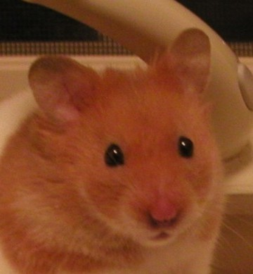 Blogger User Profile Jacob The Syrian Hamster