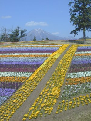 Click for YONAGO FLOWER PARK 2007  !