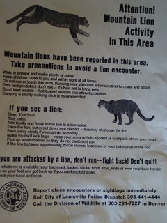 mountain lion flyer