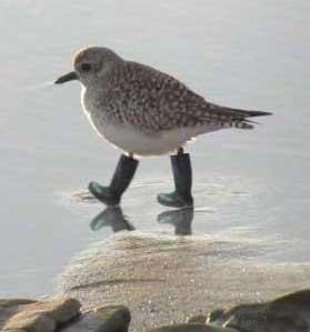 d2479278924 A última moda em medicina veterinária recomenda que as aves em geral e as  aves aquáticas