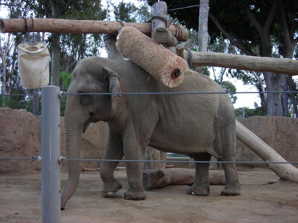 california here we come back lavaggio elefanti
