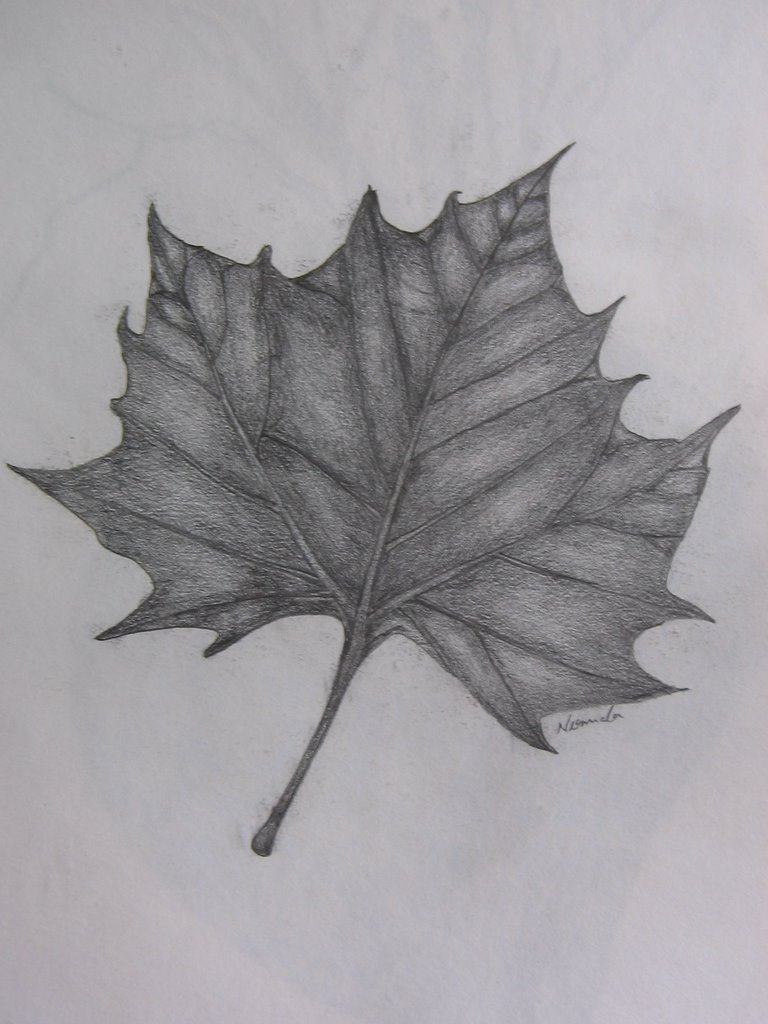 Pencil sketch of a leaf