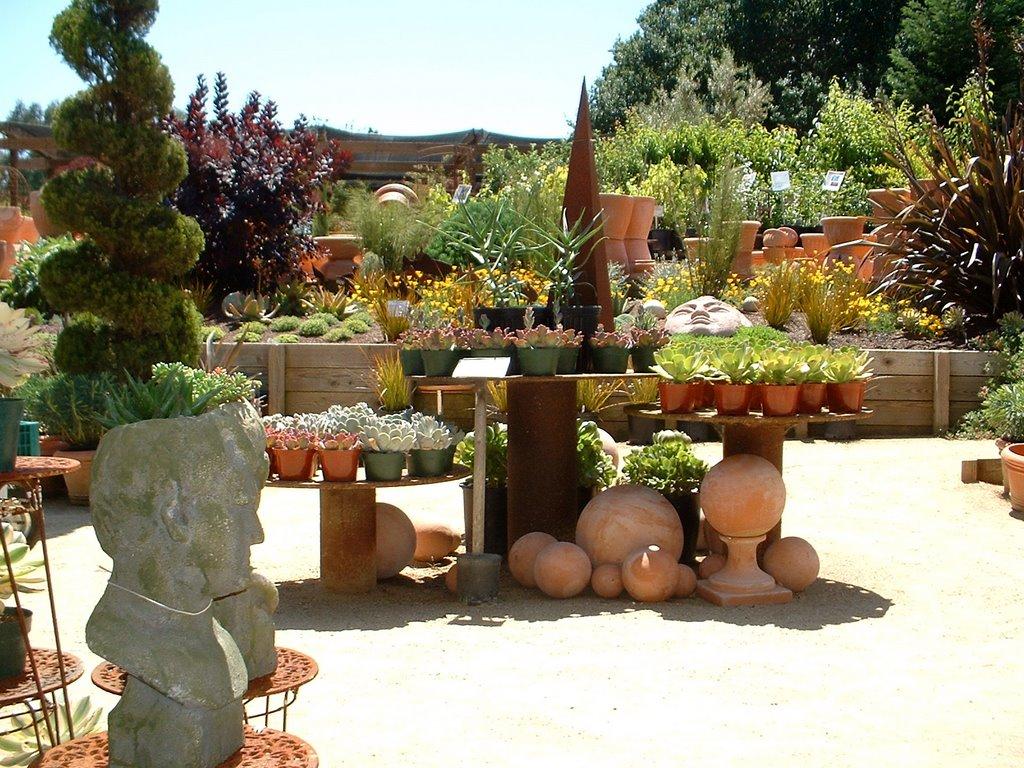 Exceptional Virtual Nursery Tour Part 1 Cottage Gardens In Petaluma