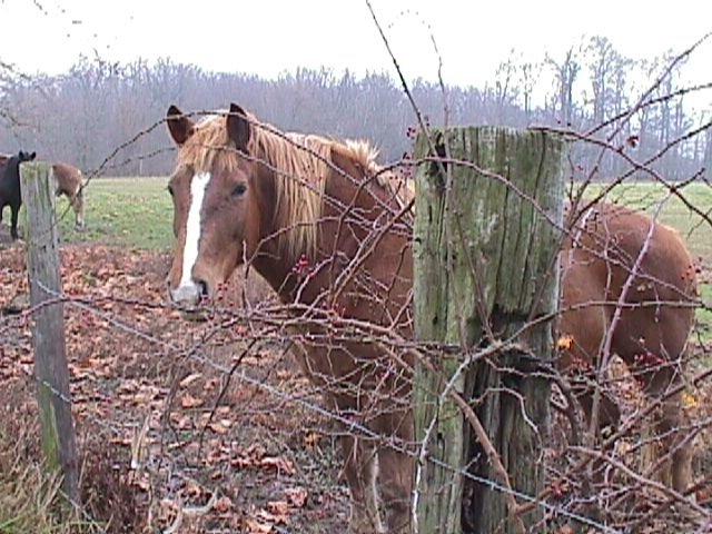 Amish Acres: The People's Exchange