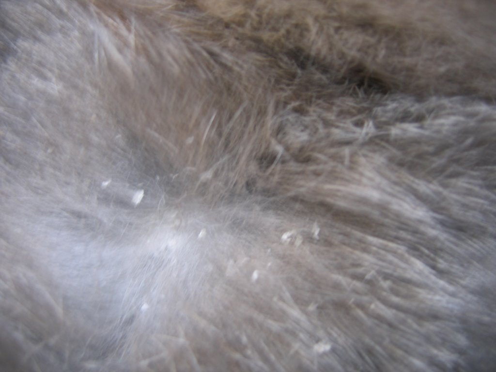 Natural Treatment For Fur Mites In Rabbits