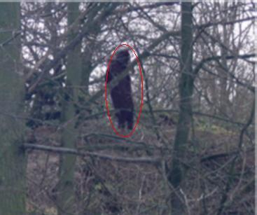 Misteri Bigfoot Terbongkar: March 2006