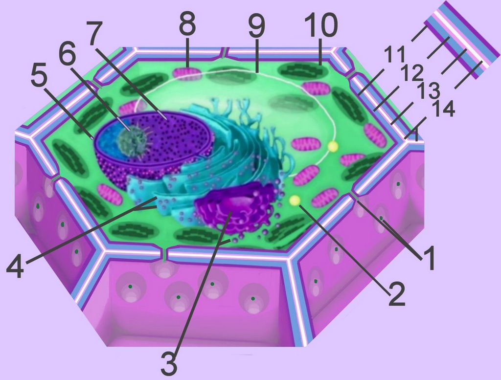vesicle in a cell - HD1024×777