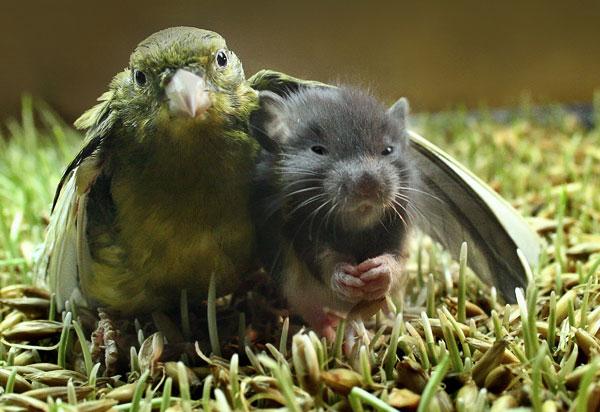 birdmouse.jpg