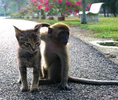 monkeykitten.jpg