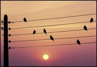 Pentagrama con pájaros