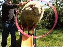 La oveja que creía que era un perro