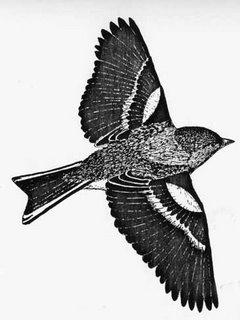 The birds from the Garden III