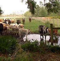 scene from osceola county florida