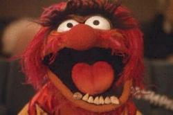 Image result for muppet animal go home