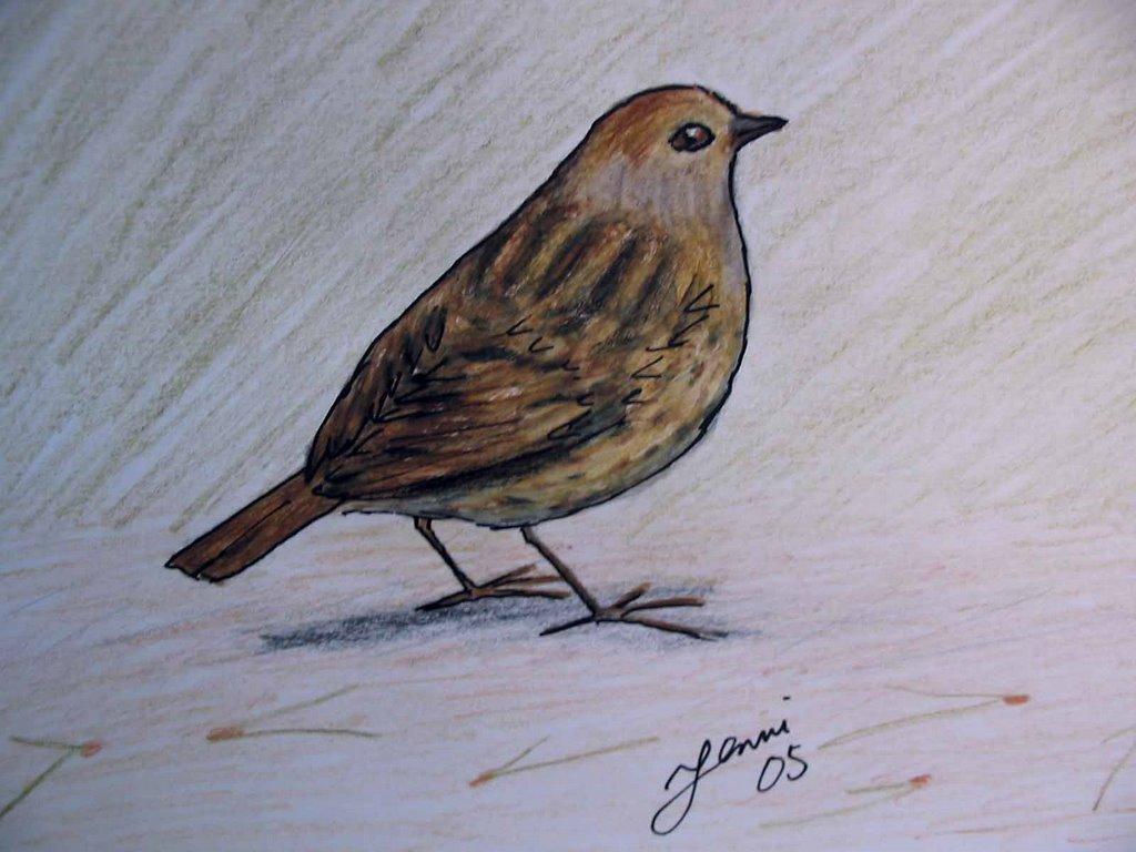 Kotipihan Linnut