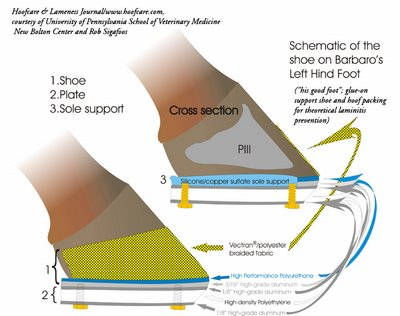 Barbaro's shoe to prevent support limb laminitis